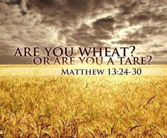 "Question: ""What is the Parable of the Wheat and the Tares?""  Answer: The Parable of the Wheat and the Weeds, or Tares, is filled with spiritual significance and truth. But, in spite of the clear explanation of the parable that Jesus gave (Matthew 13:36-43), this parable is very often misinterpreted."