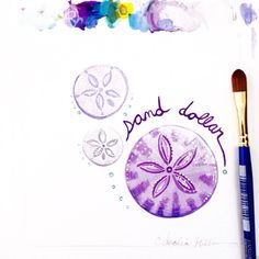 Today's #31DaysOfSeashells shell is one of my personal favorites: the Sand Dollar. I love how sand dollars are purple and fuzzy when they're living underwater, then off-white and slate grey when you find them on the beach. ❤️ Copyright Amalia Hillmann