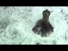 Magnifiques images de la furie des vagues en Mer d'Iroise ce lundi 8 février 2016 après-midi au large du Finistère. Un spectacle à couper le souffle. Les pha...