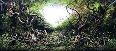 Awesome Aquariums: Winners of the 2015 International Aquatic Plants Layout Contest  http://www.thisiscolossal.com/2015/10/iaplc-aquariums-2015/