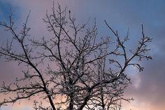Icy Branches Sunset by Georgia Mizuleva #Icy #tree #photography #art