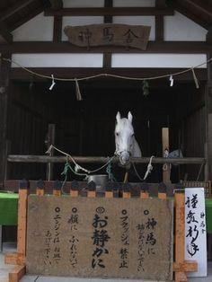 白馬 神山号〜上賀茂神社|おじゃかんばん『フォトブラ☆散歩物語』