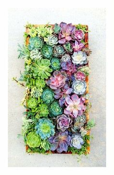 Colorful vertical gardening with succulents. I want this!!! Soph wouldn't be able to get to something on the wall
