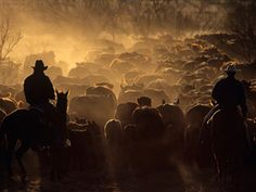 Two cowboys round up cattle on a cattle drive on the Double Mountain River Ranch outside Raton, Texas. (Joe McNally)