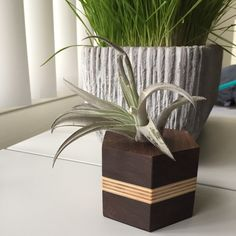Et Go Home, Wood Waste, Air Plants Care, En Stock, Wood Projects, Color Pop, Im Not Perfect, Dallas, Coasters