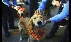 7. Existe un día festivo en Nepal, donde durante un día entero, la gente se dedica a darle las gracias a sus perros por su amistad incondicional y sincera.