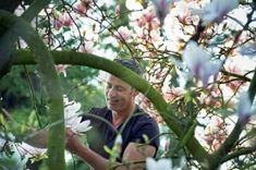 Magnolia recepten