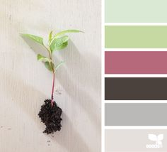 seedling hues--color palettes that work together. Can use this for deciding paint schemes, quilt schemes, other schemes.