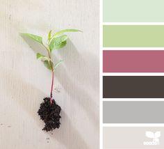 seedling hues