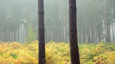 Two and a bit My Photos, Plants, Woods, Woodland Forest, Forests, Plant, Planting, Planets, Wood