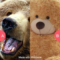 Which bear? Tap to vote http://sms.wishbo.ne/U1ak/JQdzeGmcYw