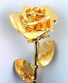 Miracle Rose  From my dear friend  Rettak! She is a miracle and is such a strong warrior!