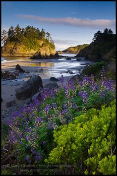 Image Detail for - Picture: Wildflowers on the coast, Trinidad State Beach, California ...