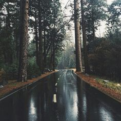 road, nature, and forest image Citations Photo, Beautiful World, Beautiful Places, Adventure Is Out There, Oh The Places You'll Go, The Great Outdoors, Wonders Of The World, Nature Photography, Photography Poses