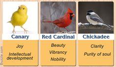 Canary, Cardinal, Chickadee