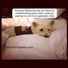 """@prestonspeaks's photo: """"#barkworld was one heck of a conference! Elvis agrees!""""    www.PrestonSpeaks.com"""