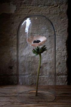 Art Floral Japonais - Akiko Usami - Part 3 Glass Bell Jar, The Bell Jar, Glass Domes, Bell Jars, Summer Flower Arrangements, Flower Vases, Ikebana, Art Floral Japonais, Cloche Decor