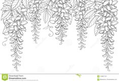 Vector arch or tunnel of outline Wisteria or Wistaria flower bunch, bud and leaf in black isolated on white background. Illustration about blossom, liana, floral, design - 118027101 Leaf Drawing, Floral Drawing, Wall Drawing, Floral Watercolor, Leaf Outline, Flower Outline, Flower Art, Hand Embroidery Designs, Diy Embroidery