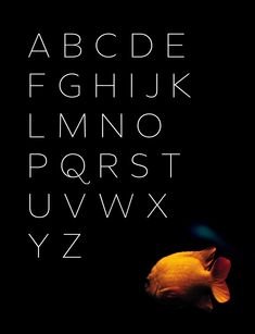 Minaxi Hairline (Text) - Free Font on Behance