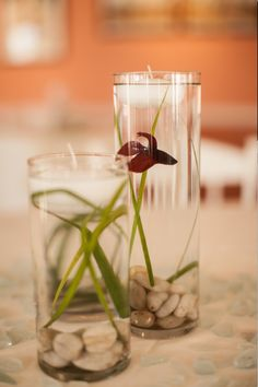 Wedding centerpieces (for guests to take home)! Beta fish and ...