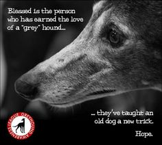 I've always said that my years working with and having greyhounds in life, saved me, not the other way around