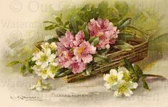 Catharina Klein...Fragrant Flowers