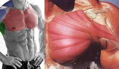 8 Insider Tips to Boost Your Chest Muscles for Big Gains