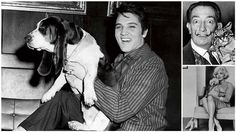 20 Famous Celebrities and Their Equally Famous Furry Counterparts | Diply