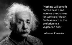 Albert Einstein was a vegetarian during the last year of his life, although he had supported the idea for a long time. In a letter to Max Kariel he said: ''I have always eaten animal flesh with a somewhat guilty conscience,'' and soon after became a vegetarian. / ''It always seems to me that man was not born to be a carnivore.'' / ''Vegetarian food leaves a deep impression on our nature. If the whole world adopts vegetarianism, it can change the destiny of humankind.''