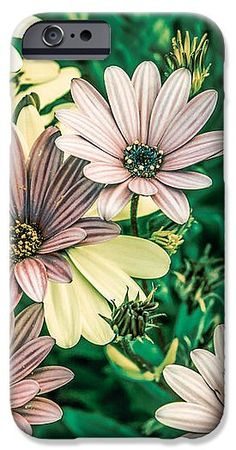 Daisy IPhone 6s Case featuring the photograph Daisies by Loredana Isac