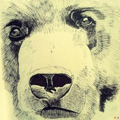 Bear Art Print by Jake Berry | Society6