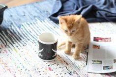 Tiny Jogurt - der kleine rote Kater