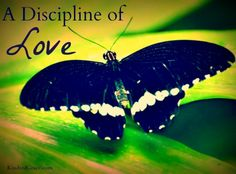 A Discipline of Love - Kindred Grace