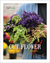 2013 Ball Seed Cut Flower Guide explores best varieties, helpful tips, market trends and display ideas. Growing Flowers, Cut Flowers, Cut Flower Garden, Plant Catalogs, Farmers Market, Decor Crafts, Helpful Hints, Flora, Seeds