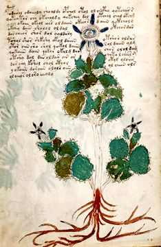World's most mysterious text is finally cracked: Bristol academic finally deciphers lost language of Voynich manuscript to reveal astrological sex tips, herbal remedies and other pagan beliefs Voynich Manuscript, Alien Plants, Scientific Drawing, Pictorial Maps, Man Of The House, Famous Books, Medieval Times, Old Books, Libros