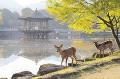 萌翻天!日本六大可愛動物景點 | ETtoday 東森旅遊雲 | ETtoday旅遊新聞(旅遊)