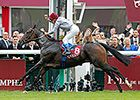 Featured Horse Profile. Treve wins the Arc again. 10/2014