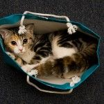 Cats in Bags
