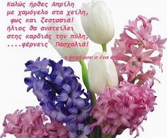 Ruan, Good Morning, Buen Dia, Bonjour, Good Morning Wishes