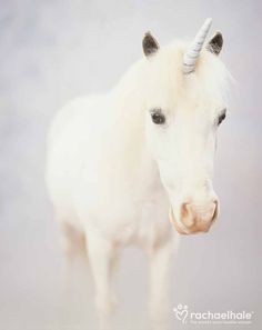 Unicorn (Pony) - Unicorns and rainbows and all things….