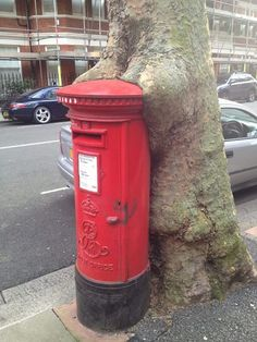 Tree eating a post box! - Fitzjames Avenue, off North End Road, London W14, UK
