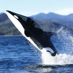 The Killer Whale Submarine - 255hp of wave shredding fun.