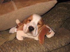 10 fotos demasiado adorables de mascotas con sus peluches