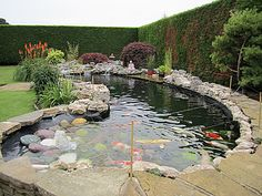 The best fish pond concept that you should try at home 20 Fish Ponds Backyard, Swimming Pool Pond, Backyard Water Feature, Koi Ponds, Fish Pond Gardens, Koi Fish Pond, Water Gardens, Pond Landscaping, Landscaping With Rocks