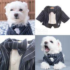 Don't ever be scared of the dark because I will be your knight in shining armor☝️✨. My suit http://Unitedpups.com/ep #suit #groomsmen #weddingdog #whitedog #dogoftheday #petlove #mydogiscutest #maltese#pomeranian#yorkie#chihuahua #shihtzu #poodle#unitedpups #cutiepie  #dogsuit #handsome