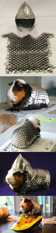 Guinea pig armor.                                                                                                                                                                                 More