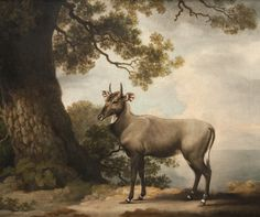 The Nilgai by George Stubbs.