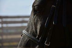 Horse #detail