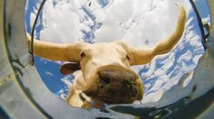 A Fascinating Underwater View of Thirsty Desert Animals Drinking From a Bucket With a Camera