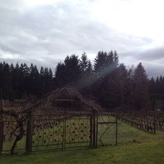 Entrance to vineyards at Whidbey Island Winery, WA.